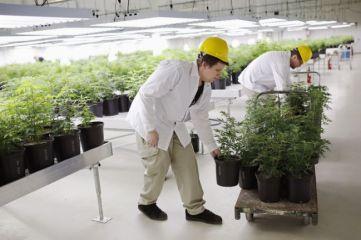 Cartels_are_growing_marijuana_illegally-a44c0304192e6ba27cba81e2bdabea36
